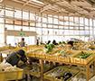 農産物産館 オランチェ