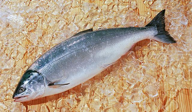 さかな歳時記「二十四節気・寒露」 心していただきたい神の魚