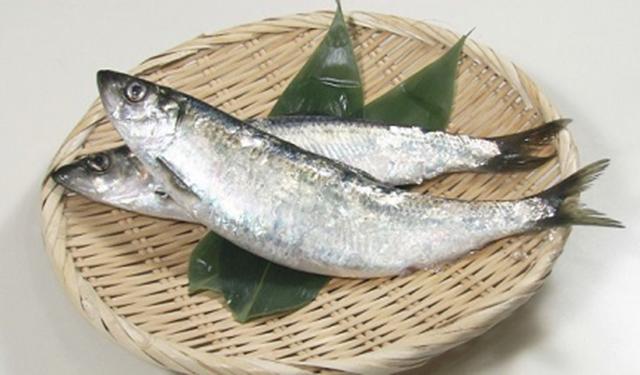 さかな歳時記「二十四節気・立春」 春告魚
