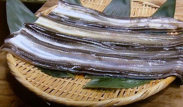 さかな歳時記「二十四節気・小暑」 煮る関東 焼く関西