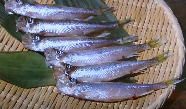 さかな歳時記「二十四節気・霜降」 柳の葉が姿を変えた、日本固有の魚