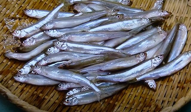 日本の旬を知りたい! [二十四節気の魚 1月]