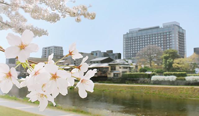 本格的な京料理とホテル洋食 花見のお供に豪華な春の行楽弁当を