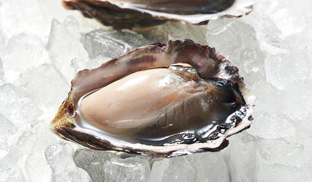 日本初の干潟養殖牡蠣が オンラインショップで全国展開